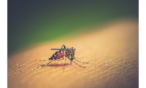 Dengue Essentials