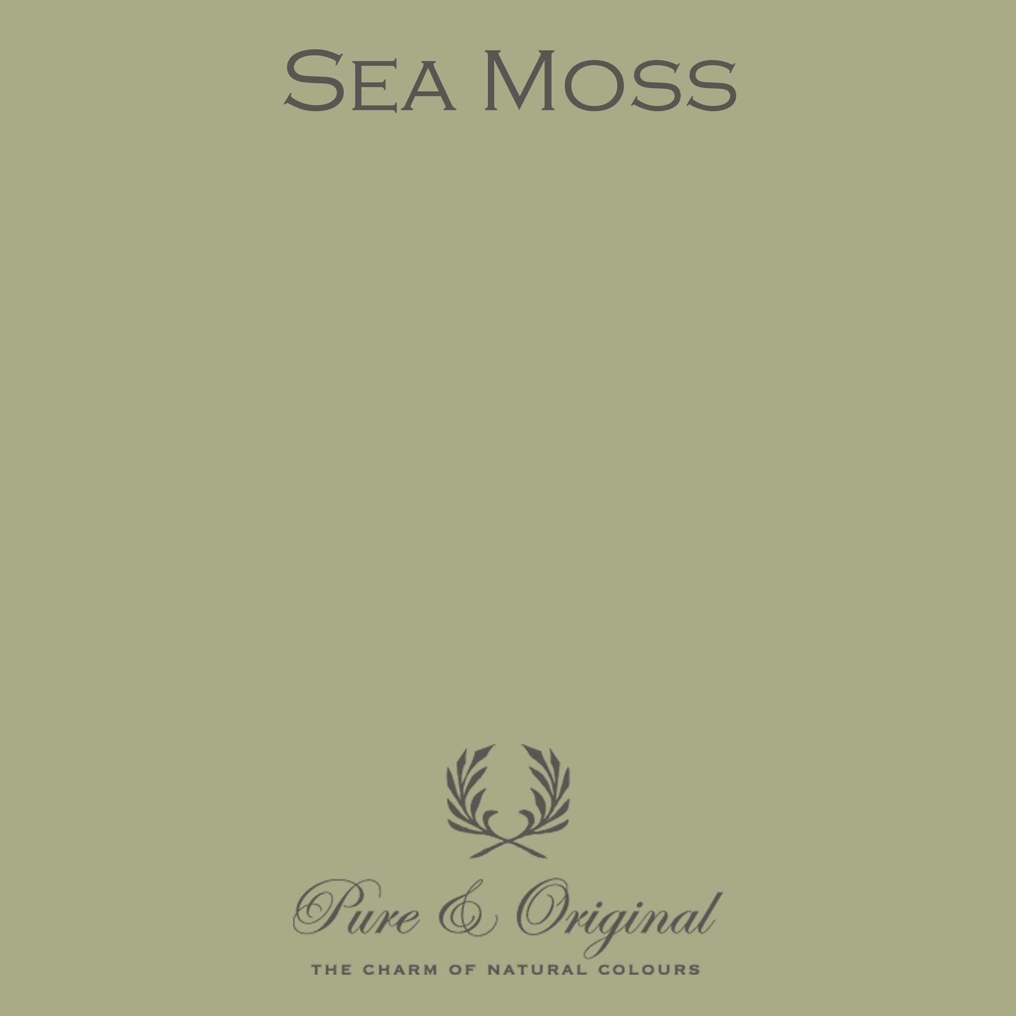 Traditional Paint Waterbased Sea Moss