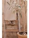 Pompom deken camel 100x150 cm