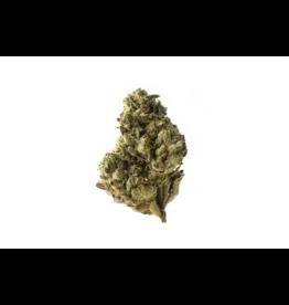 Strawberry Glue AG 3 zaden