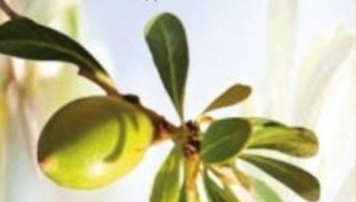 Keune So Pure Moroccan Argan Oil een weldadige verzorging voor haar en hoofdhuid