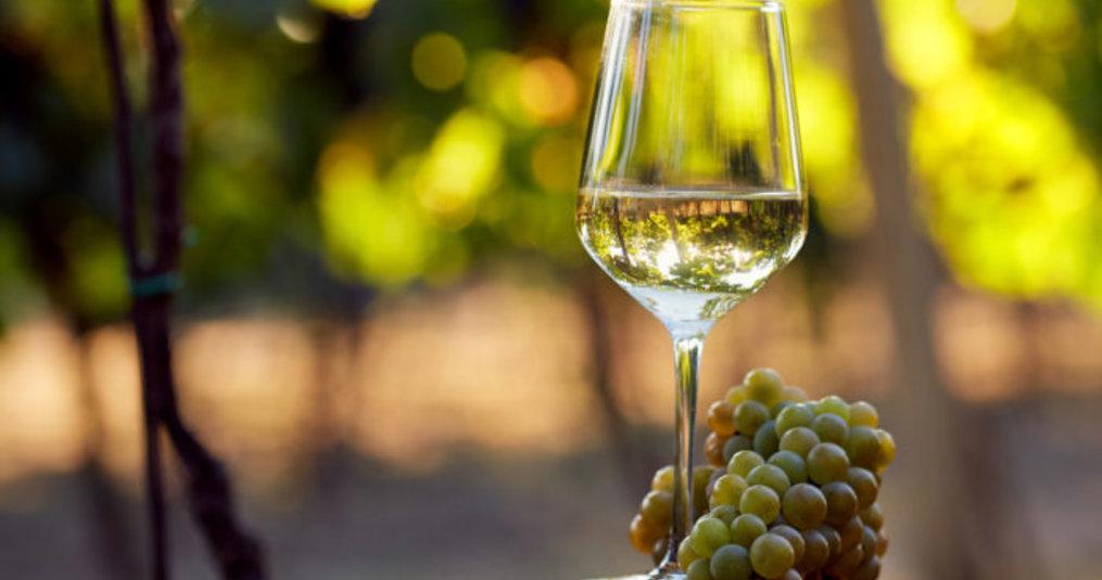 De belangrijkste druiven voor witte wijn