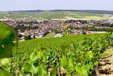 Witte wijn is populairder dan ooit!
