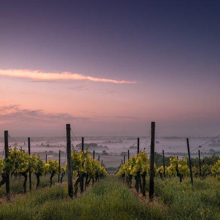 Wijnland Italie
