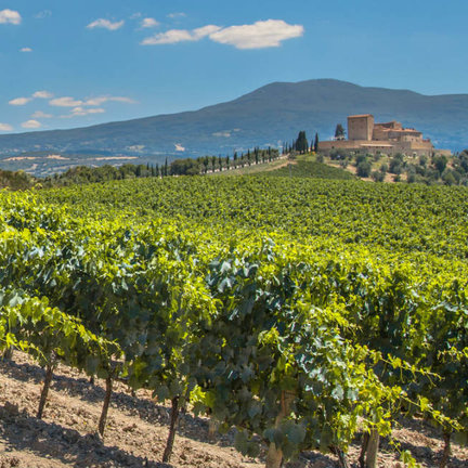 Wijnland Spanje