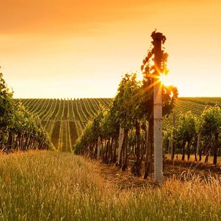 Wijnland Australie