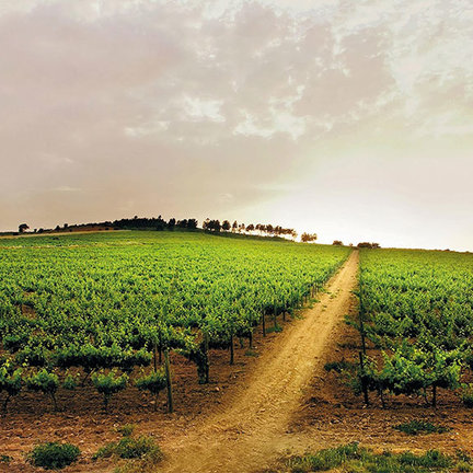 Wijnland Portugal
