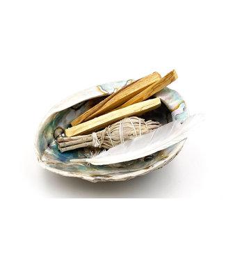 Coquillage d'Ormeau ou Abalone