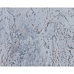 Wandkurk ' Virgem Light Blue ' GEWAXT - 60 x 30 cm - 3mm dik m²