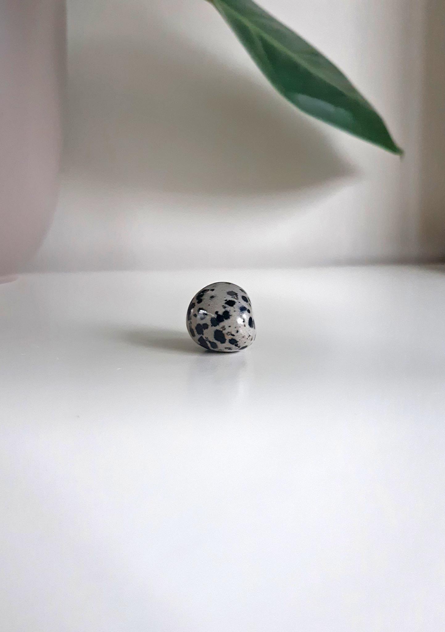Gemstone dalmatian-1