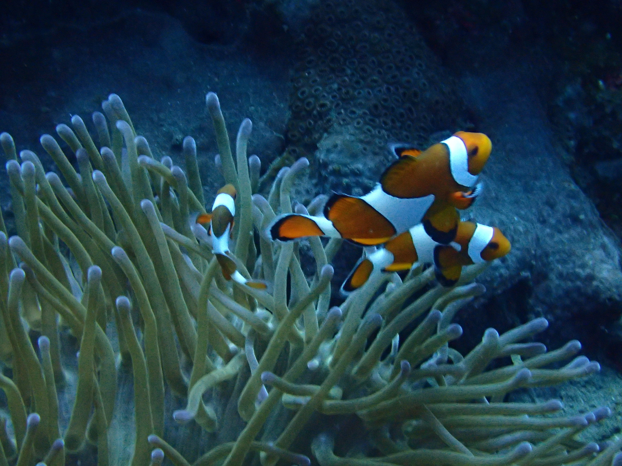 Symbiose onderwater