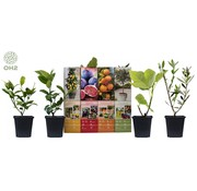 Flower-up Flower-up Set van 4 Mediterrane planten 25 - 40 cm