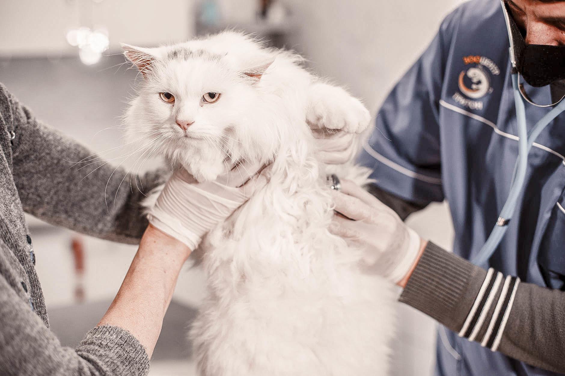kat-naar-dierenarts-vaccineren
