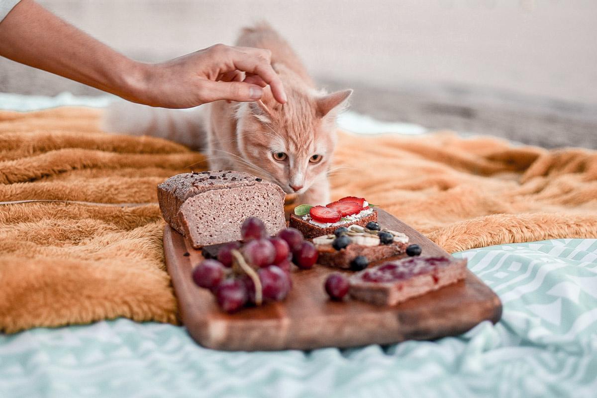 Kat die kijkt naar houten borrelplank met daarop brood en fruit