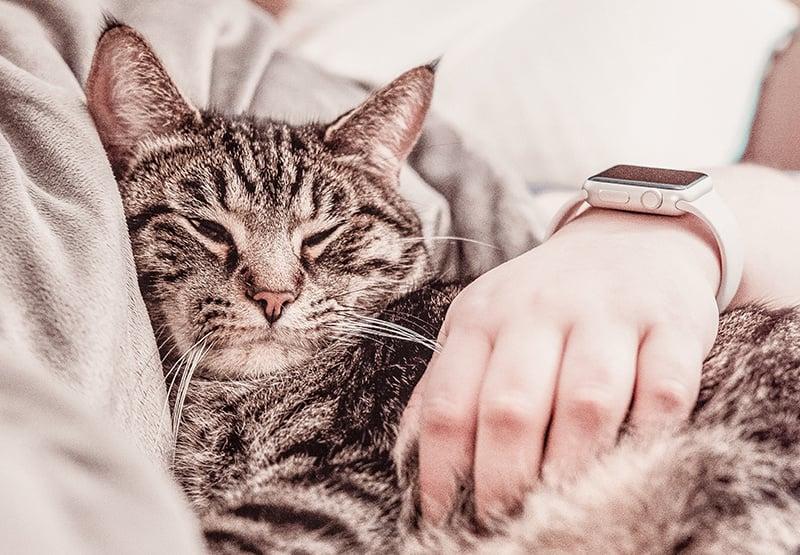 Kat die op schoot ligt met een arm over de rug heen.