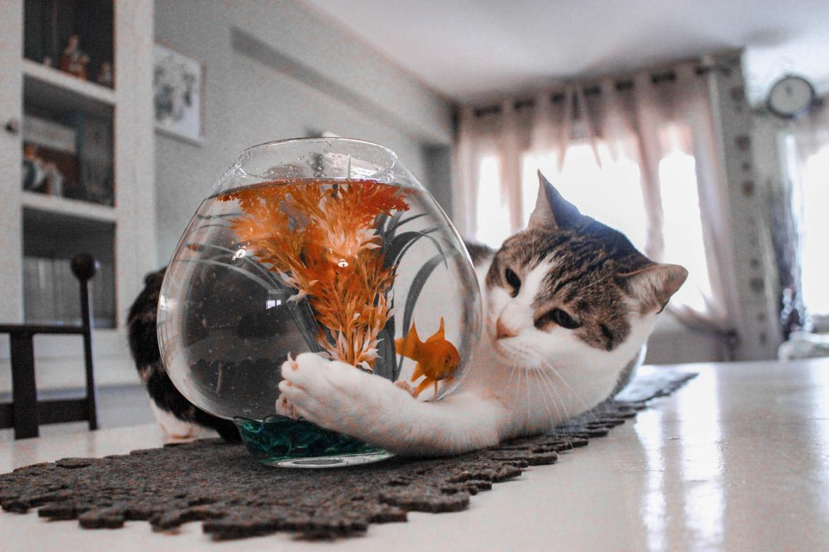 Kat die zijn poot om vissenkom heeft liggen.
