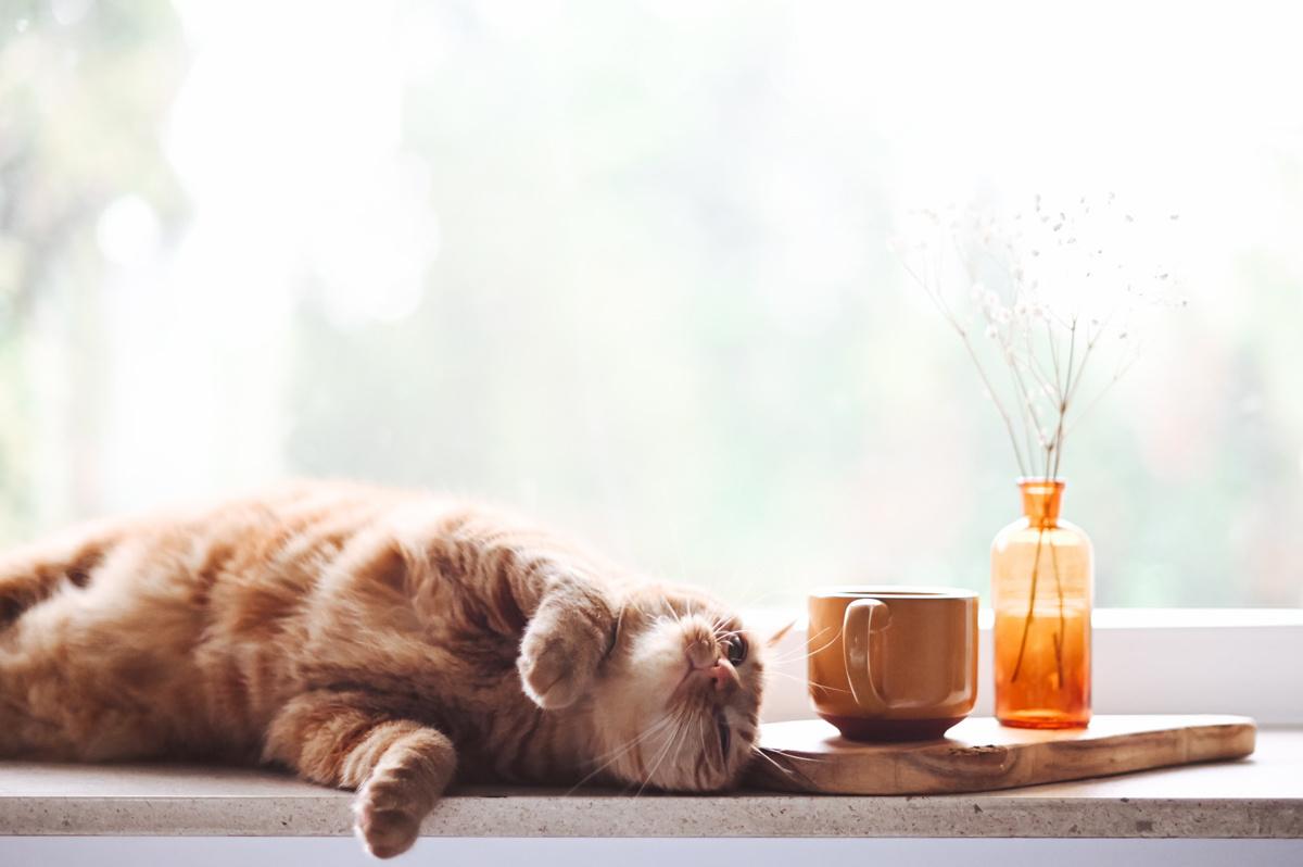 Kat die in de vensterbank ligt naast een kopje.