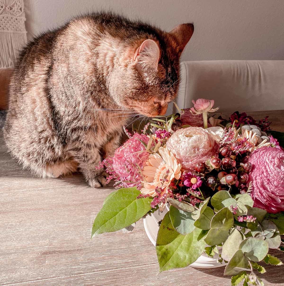 Kat die aan bloemen ruikt.