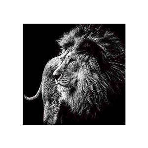 Schilderij glas leeuw