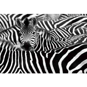 Schilderij glas zebra's