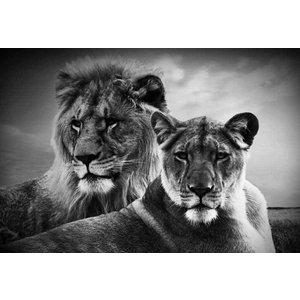Schilderij glas leeuwen