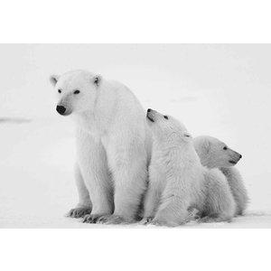 Schilderij glas ijsbeer