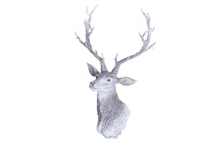Home society Deer Georgetta Head