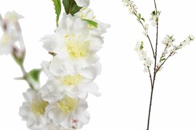 PTMD Blossom Flower White Sakura