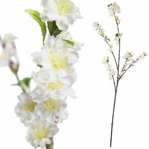 Blossom Flower White Sakura