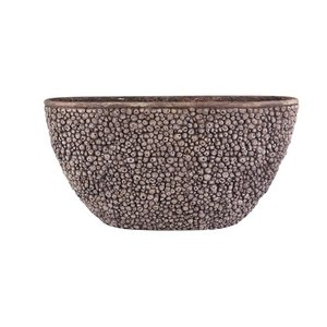 Boat shell brown 39cm