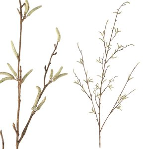 Twig plant green alder spray
