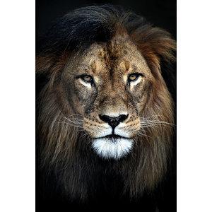 MondiArt Schilderij leeuw 80-120cm Alu