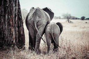 MondiArt AluArt Elefants mother and child
