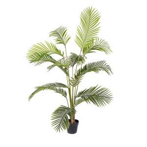 Plant Kwai groen