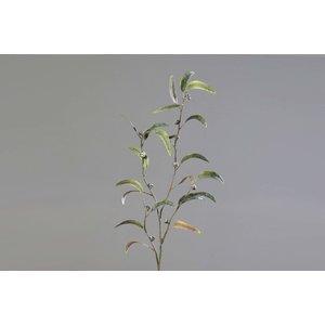 Brynxz eucalyptus-infructescence, 100CM