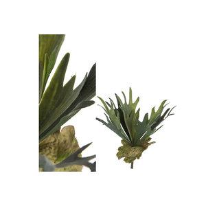 PTMD Leaves Plant Green staghorn bush