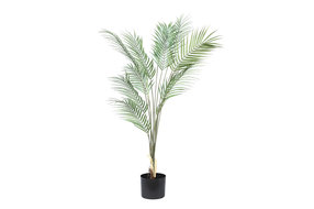 PTMD PMTD Tree Plant green palm leaves L