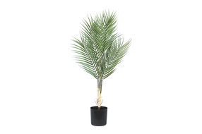 PTMD PMTD Tree Plant green palm leaves S