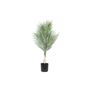 PMTD Tree Plant green palm leaves S