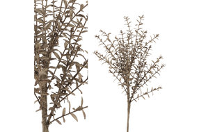 PTMD PMTD Leaves Plant brown boxwood bush