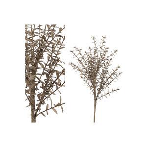 PMTD Leaves Plant brown boxwood bush