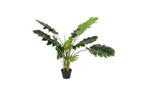 Home society Home Society Plant Monstera L