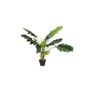 Home Society Plant Monstera L