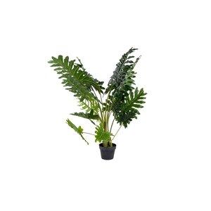 Home Society Plant Philon