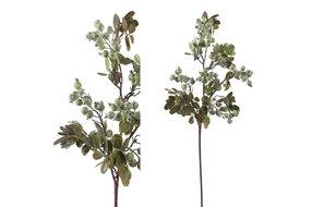 PTMD PMTD Berry Plant green berry leaf spray