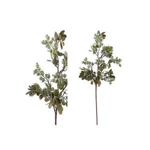 PMTD Berry Plant green berry leaf spray