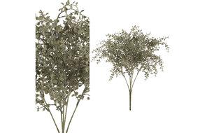 PTMD PMTD Leaves Plant green baby tears leaf bush