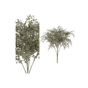 PMTD Leaves Plant green baby tears leaf bush