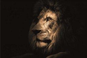 Eigenstijl Wonen Glasschilderij leeuw - 120x80cm