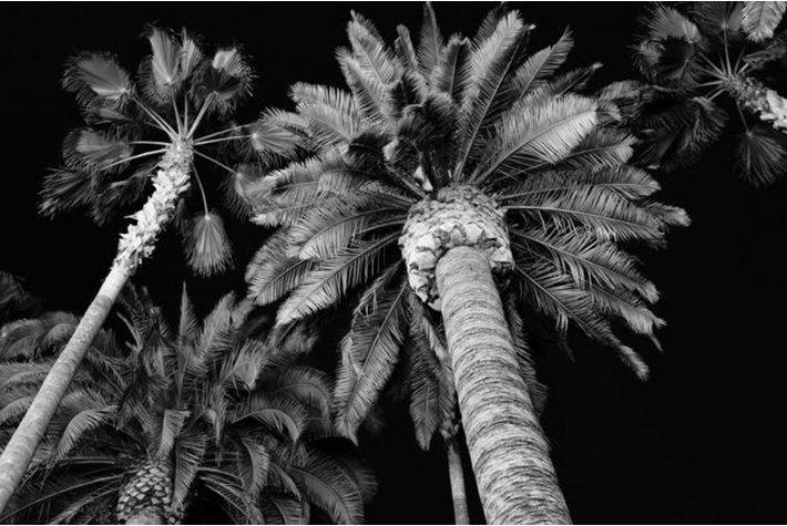Eigenstijl Wonen Glas schilderij palm zilver